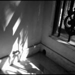 Weekly Photo Challenge: Shadow